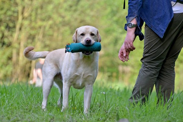 Dummytraining (Retriever)