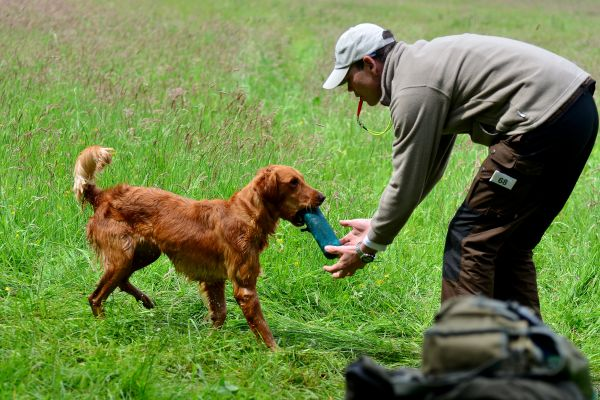 Working-Test Gronau, Retriever on Tour